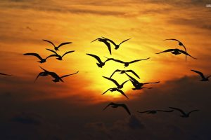 Bird Flock At Sunset
