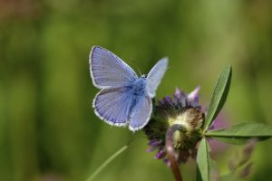 Blue Butterfly Close Up