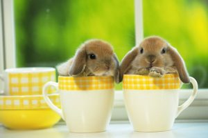 Bunnies In A Cup