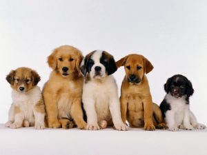 Different Puppies
