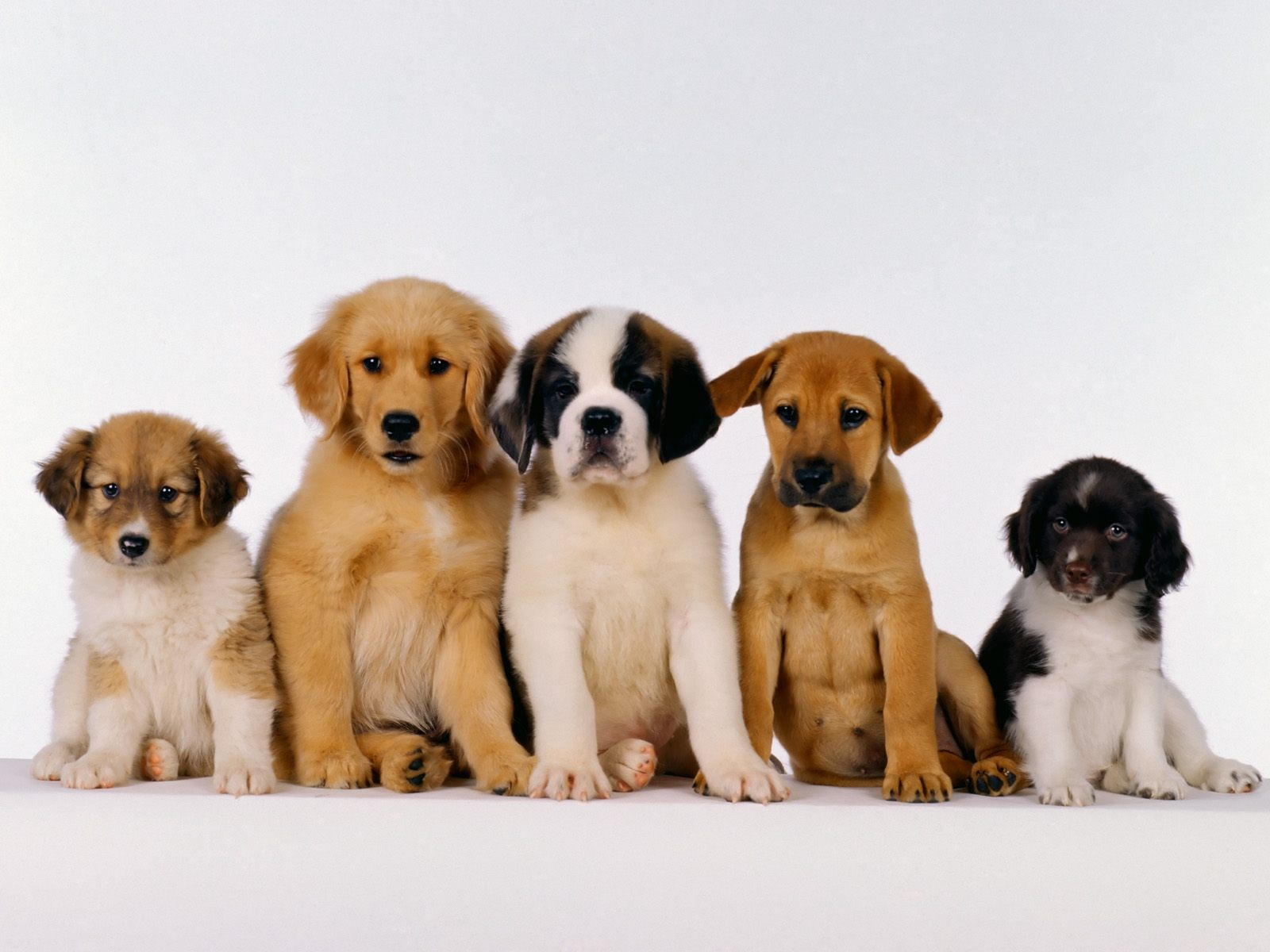 Different Puppies Wallpaper 1600x1200 px