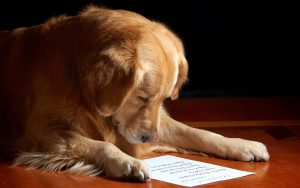 Dog Reading The Letter