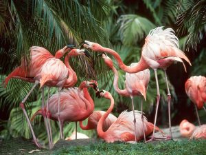 Flamingos Lunch