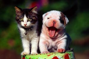Funny Best Friends