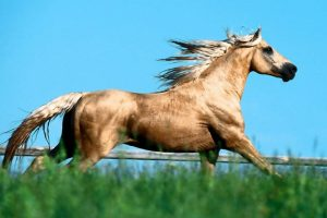 Great Silver Horse