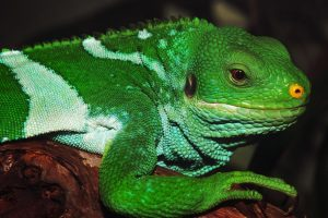 Green And White Lizard