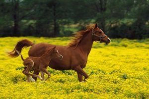 Horse Family In Field