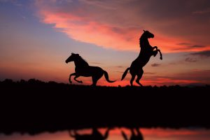 Horse Silhouettes In The Sunset
