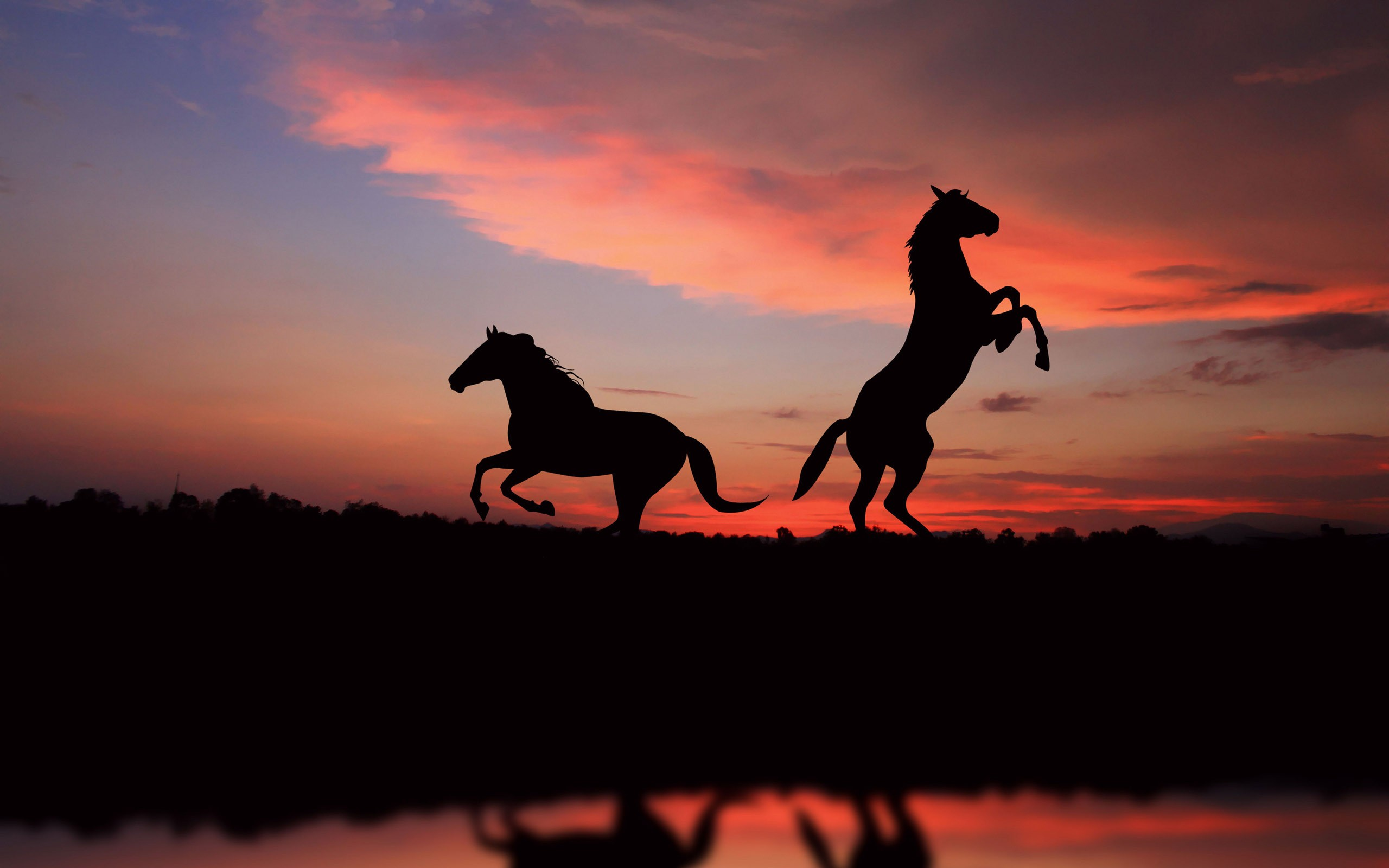 Horse Silhouettes In The Sunset Wallpaper 2560x1600 px