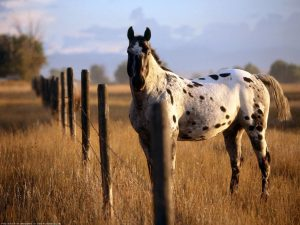 Horse With Black Points