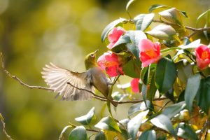 Hummingbird On The Flower
