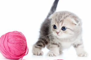 Kitten With The Ball