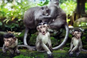 Monkeys Family