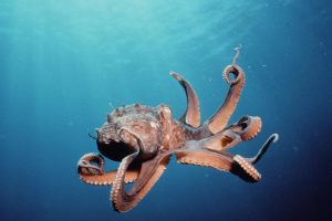 Octopus In The Deep HD