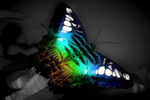 Rainbow Colors Butterfly
