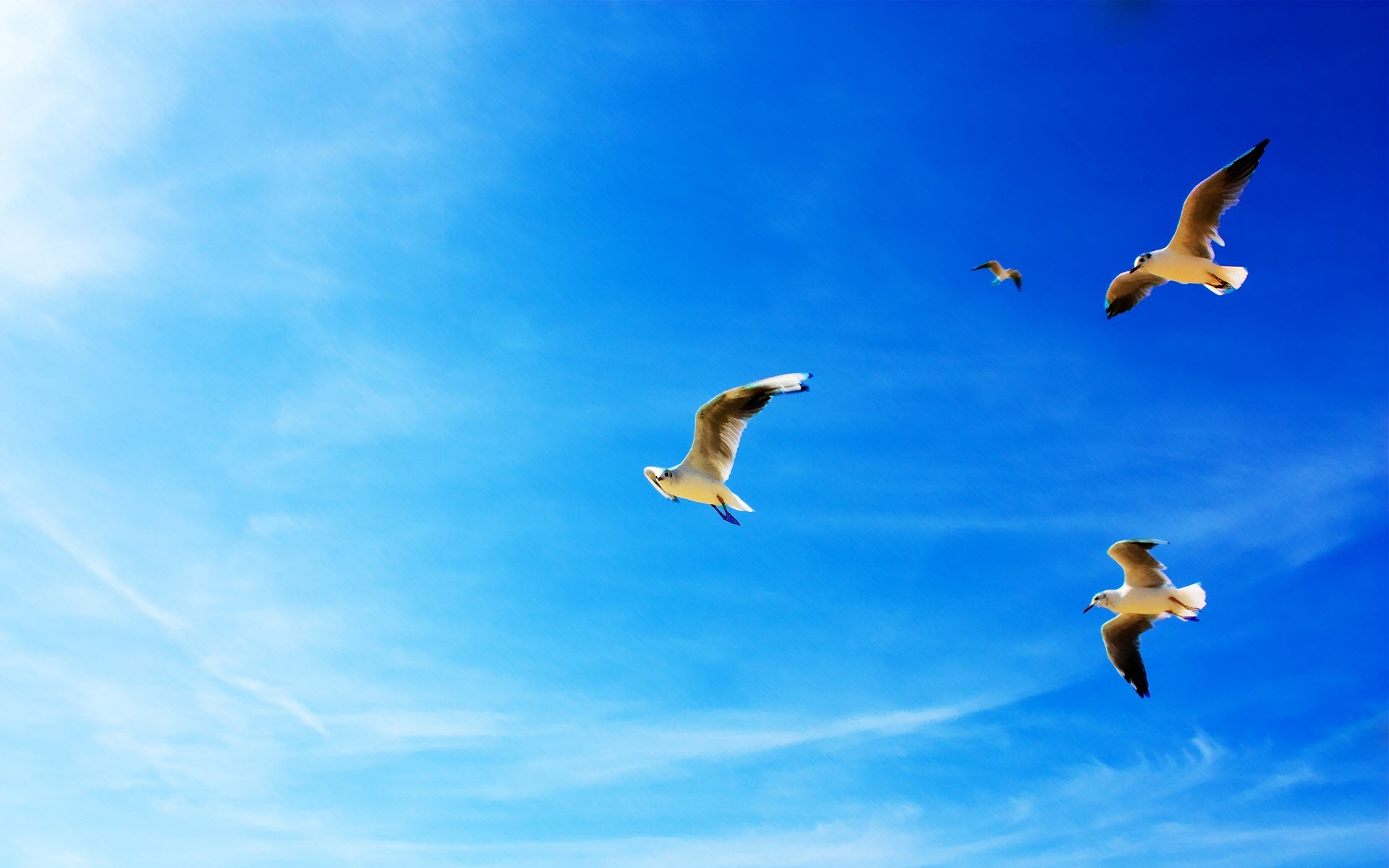 Seagulls On The Sky Wallpaper 1920x1200 px