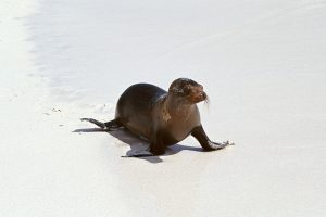 Seal On The Sand