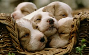 Together Is Better – Puppies