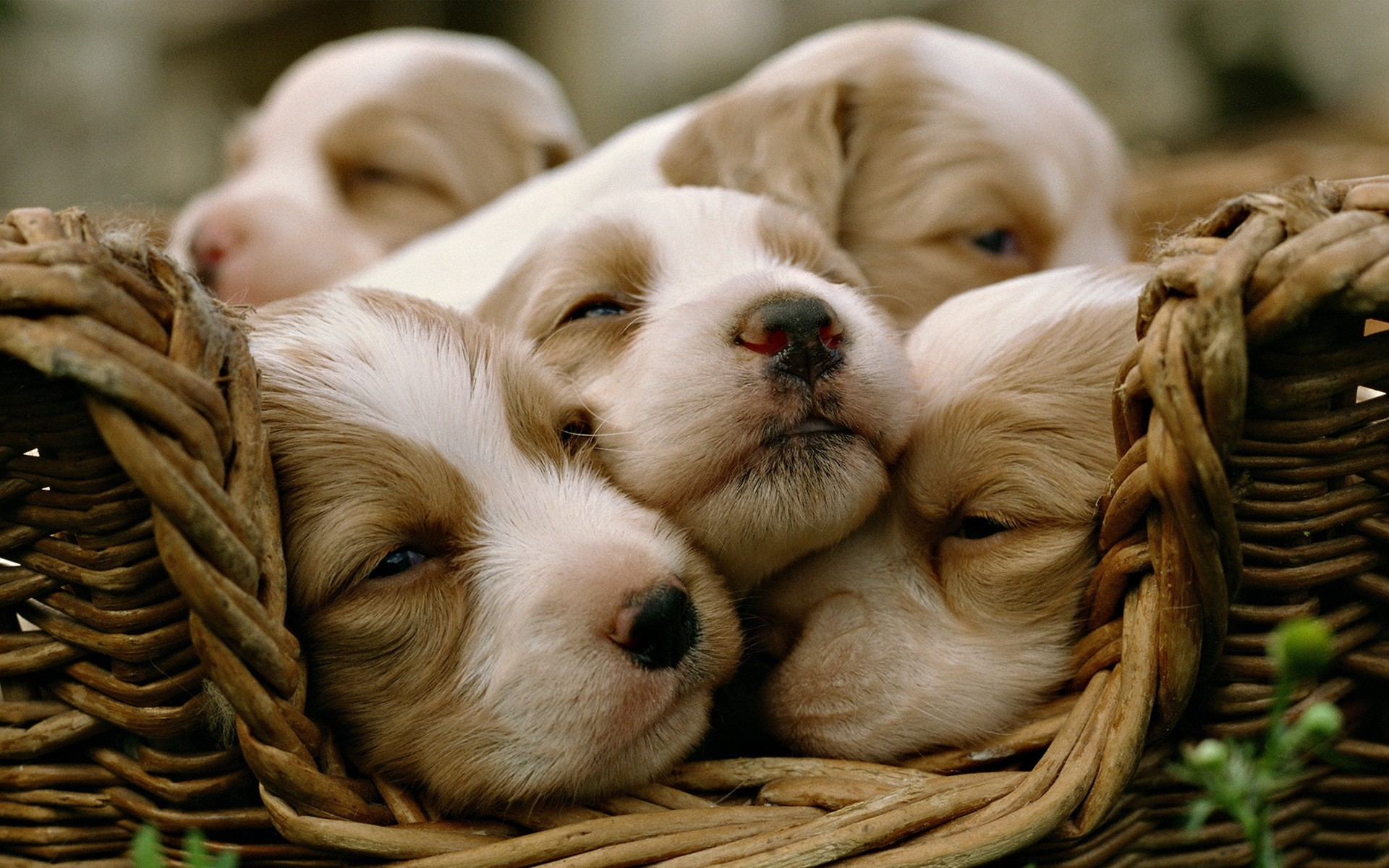 Together Is Better – Puppies Wallpaper 1920x1200 px
