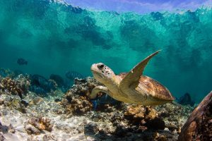 Turtle Under Waves