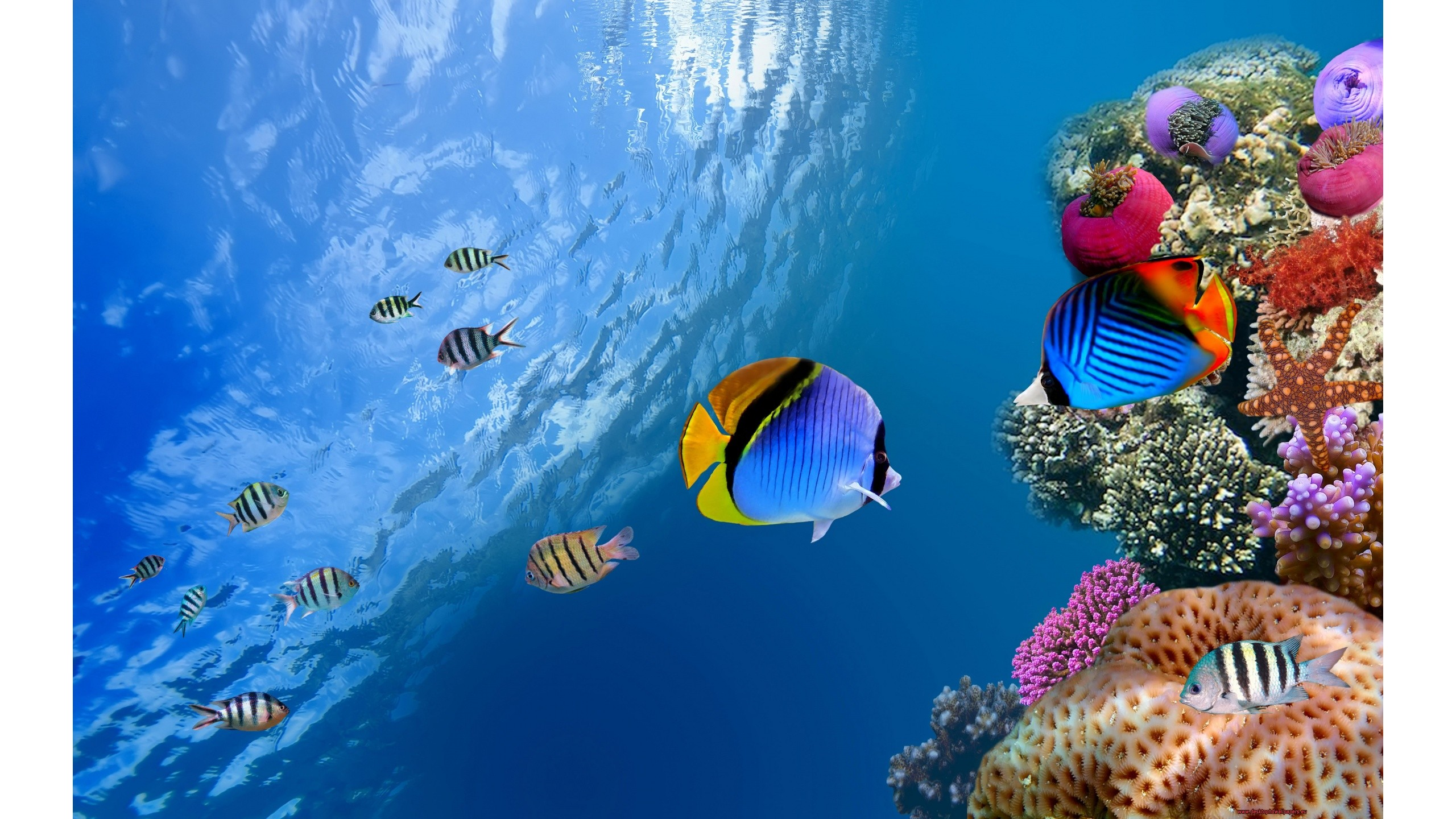 Underwater World Of Fishes Wallpaper 2560x1440 px