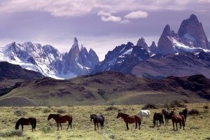 Wild Horses Under The Mountain